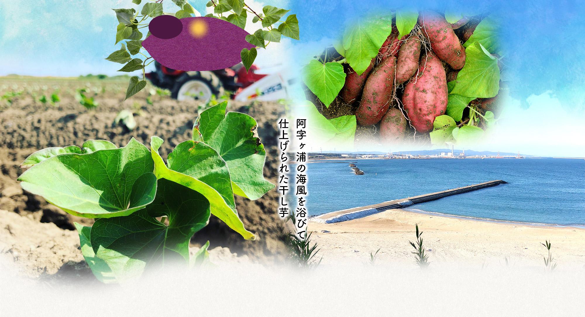 阿字ヶ浦の海風を浴びて仕上げられた干し芋
