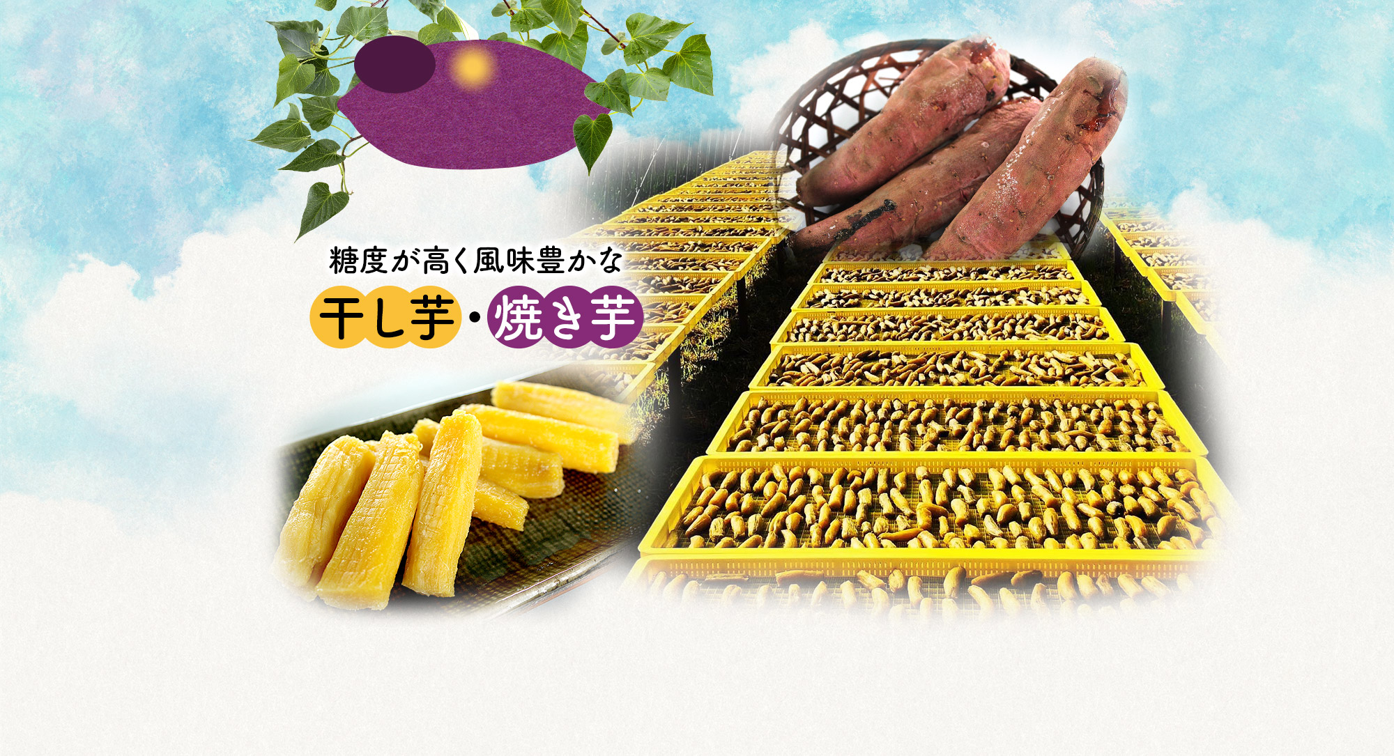 糖度が高く風味豊かな干し芋・焼き芋